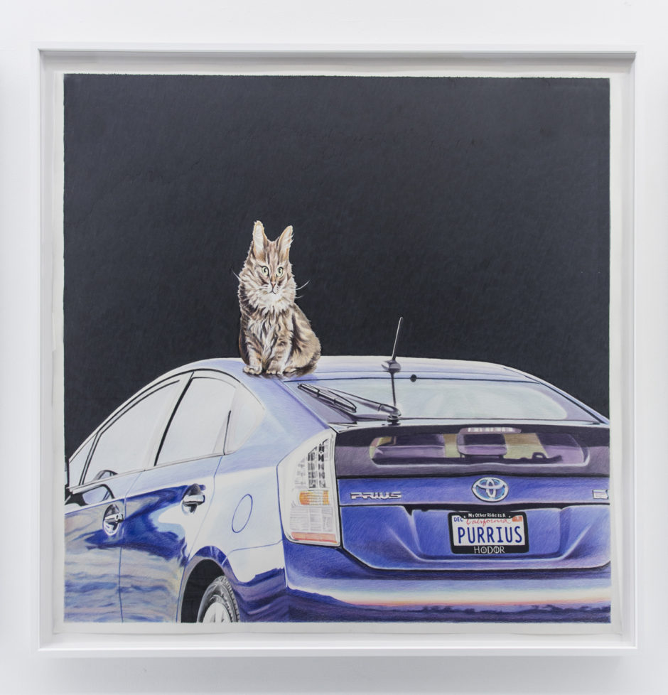 Purrius, 2016, colored pencil on paper, 54 x 54 inches